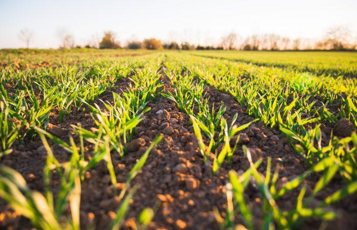 En tiempos de pandemia mundial, el rescate de hábitos alimentarios de familias agricultoras puede garantizar la seguridad alimentaria en comunidades rurales