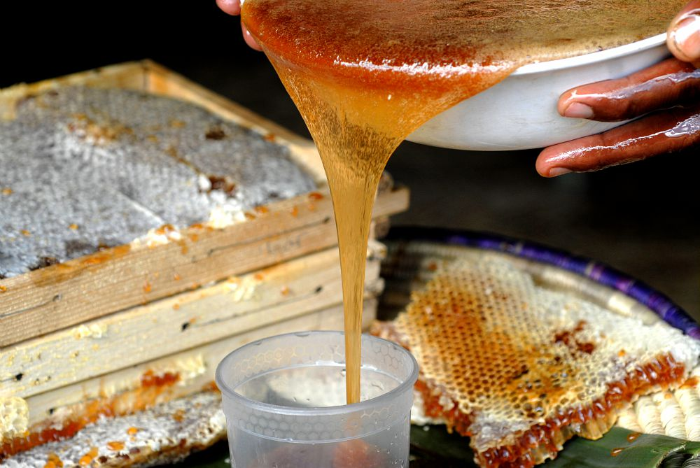 Wenchi Volcano Honey, a Project of Preservation - Slow Food International