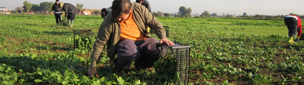 agricolture slow food europe