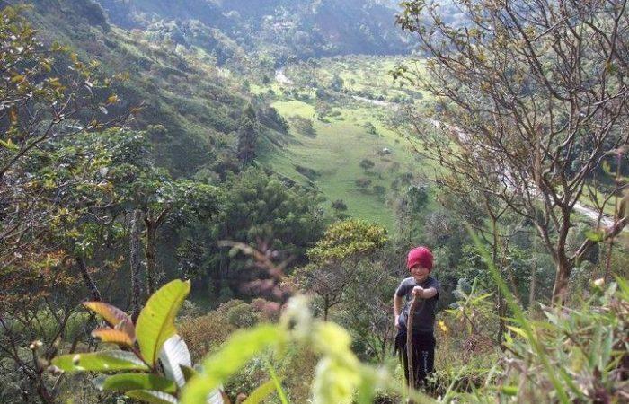 La lucha de Colombia por disminuir la cultivación de transgénicos y proteger su biodiversidad