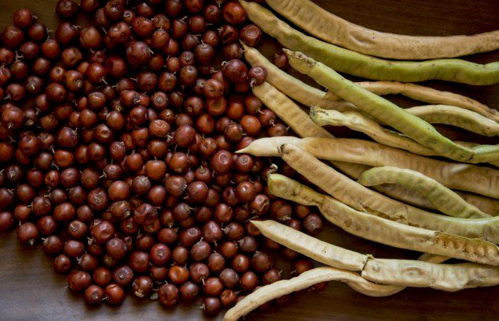 From Argentina: Gran Chaco wild fruits Slow Food Presidium