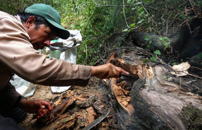 Argentina: la Miel silvestre del pueblo Wichí