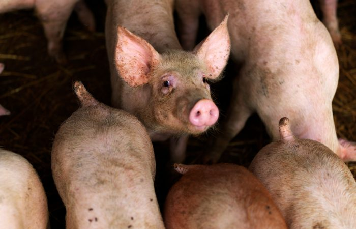A Glimmer of Hope for Animal Welfare in Europe