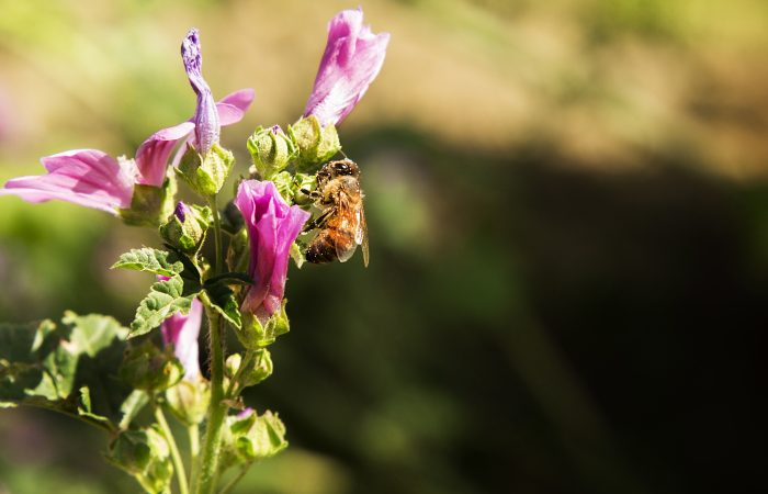 European Green Deal Needs to Cut Pesticides and Switch to Agroecology
