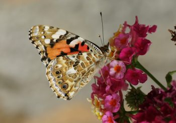 Insektenschutzgesetz: Wichtiger Meilenstein für nachhaltige Ernährung