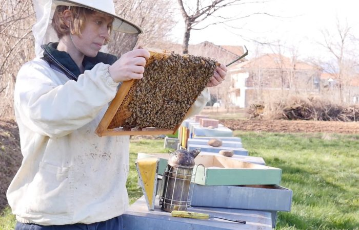 """Story of a Beekeeper: """"Bees are fascinating beings"""""""