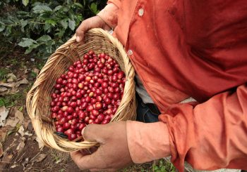 Coffee is more than an everyday drink; it's a complex agricultural product.