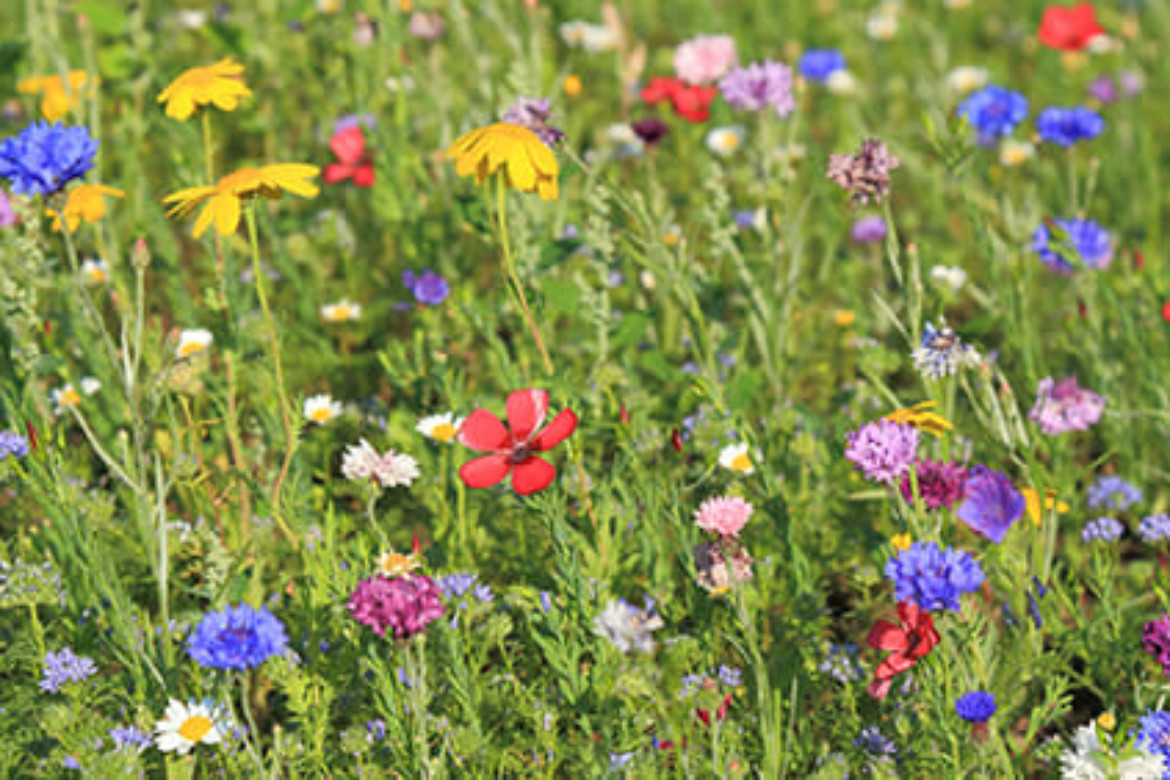 10 small but very big things you can do to save bees and ...