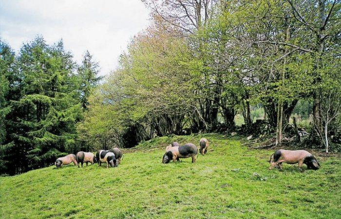 Emilia Romagna on the Path Towards Cage-Free Farms