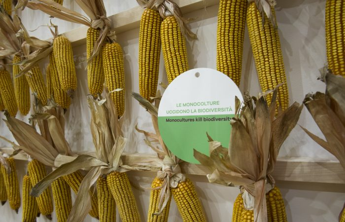 European Commission Opens the Door to New GMOs