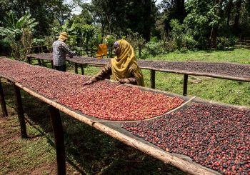 Who's behind your cup of coffee? Traceability means identity