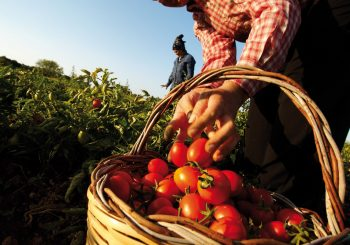 EU Parliament Gives the Green Light to the Farm to Fork Strategy
